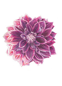 Bloemenkaart | Dahlia