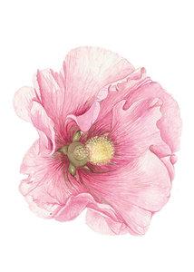 Bloemenkaart | Stokroos